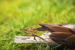 Oiseau mort Image libre de droits