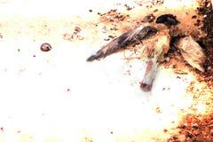 Oiseau mort Images stock