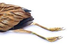 Oiseau mort Image stock