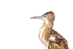 Oiseau mort Images libres de droits