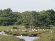 Oiseau nature sauvage sri lanka. Bird, sri lanka, Oiseau  sauvage Royalty Free Stock Photos