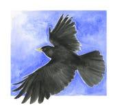 Oiseau noir - chough alpestre Photo libre de droits