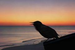 Oiseau noir et coucher du soleil Images libres de droits