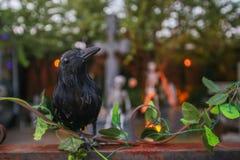oiseau noir sur l'horreur bleuie, concept de Halloween Image stock