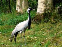 Oiseau observé rouge Photos libres de droits