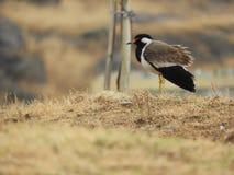 Oiseau, papier peint, birdphotography Photo stock