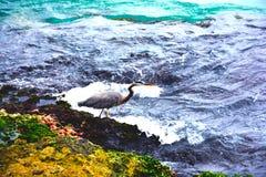 Oiseau par l'océan avec des vagues image stock