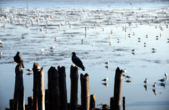 Oiseau par la mer Photographie stock libre de droits