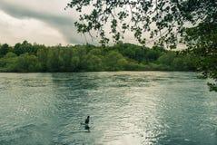 Oiseau par le lac et la végétation tranquilles Photographie stock libre de droits