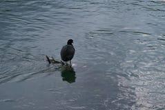 Oiseau par le lac et la végétation tranquilles Photographie stock