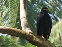 Oiseau, Porto Rico Photos stock