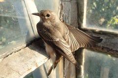 Oiseau près d'une fenêtre Photographie stock libre de droits