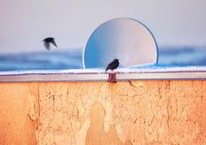 Oiseau près de l'antenne image stock
