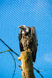 Oiseau prédateur Photographie stock