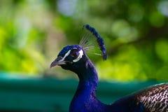 Oiseau principal Image stock