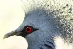 Oiseau punk bleu Image stock