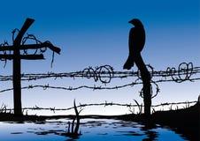 Oiseau restant sur la frontière de sécurité de fil Photo libre de droits
