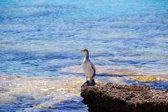 Oiseau Rhodos Grèce Photos libres de droits