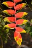 Oiseau rouge de fleur de paradis Image stock