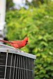 Oiseau rouge sur l'unité d'état d'air Images libres de droits