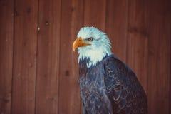 Oiseau sauvage Photographie stock