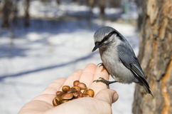 Oiseau sauvage se reposant à disposition Photo stock