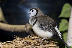 Oiseau se reposant sur l'emboîtement Images stock