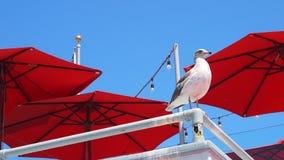 Oiseau se reposant sur un courrier avec le ciel bleu et les parapluies rouges Photographie stock libre de droits