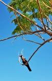 Oiseau seul photographie stock libre de droits