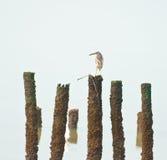 Oiseau seul photos stock