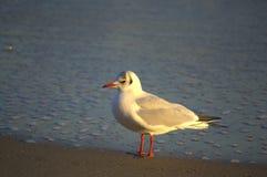 Oiseau seul Images stock