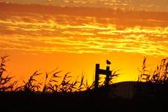 Oiseau seul au coucher du soleil Image libre de droits