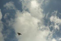 Oiseau seul dans le ciel images libres de droits