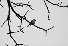 Oiseau seul sur le branchement images stock