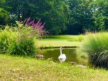 Oiseau simple photographie stock
