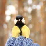 Oiseau songeur Photo libre de droits