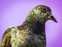 Oiseau soutenu pour être prédateurs Photo stock