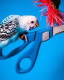 Oiseau sur des ciseaux images stock