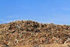 Oiseau sur des ordures photo libre de droits
