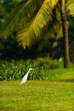 Oiseau sur Goa Image stock