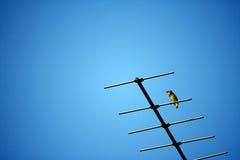Oiseau sur l'antenne de TV et un ciel bleu clair Photo libre de droits