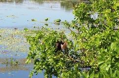 Oiseau sur l'arbre Photographie stock