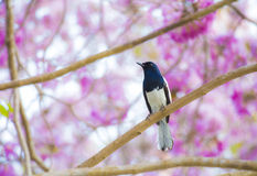 Oiseau sur l'arbre Photographie stock libre de droits