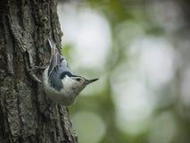 Oiseau sur l'arbre Photo stock