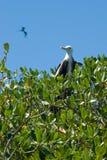 Oiseau sur l'arbre de palétuvier image libre de droits