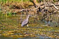 Oiseau sur l'eau photographie stock
