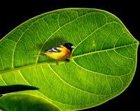 Oiseau sur la branche Photo stock
