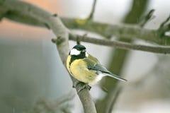 Oiseau sur la branche Photographie stock