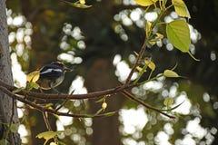 Oiseau sur la branche Photos stock