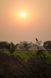 Oiseau sur la branche et de coucher du soleil le dos dedans Image libre de droits